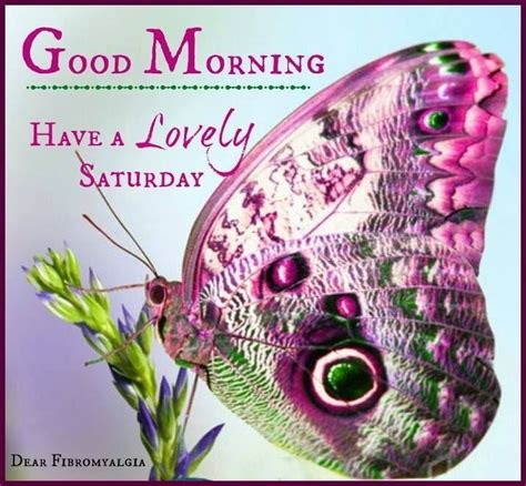 good morning   lovely saturday pictures