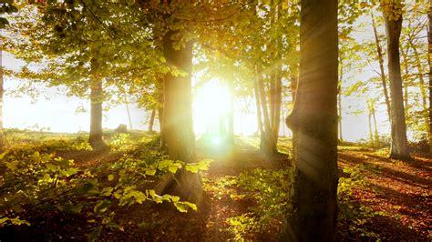 autumn fall nature background. sunbeam light shining ...