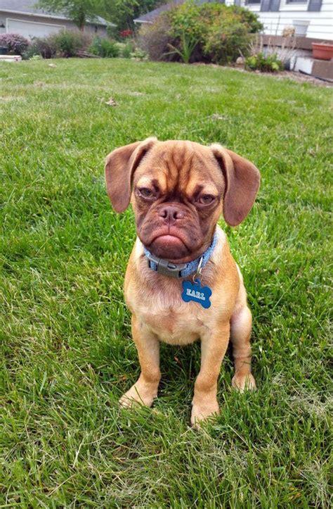 earl  grumpy puppy    judgy animal