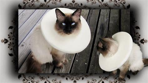 diy halskrause leckschutz kragen fuer katzen hunde