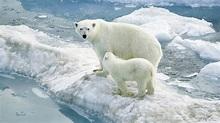 北極熊(熊科動物的一種):外形特徵,棲息環境,生活習性,活動,食性,捕獵,雙手靈活_中文百科全書
