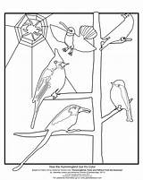 Coloring Hummingbird Sheet Got Its Resources sketch template