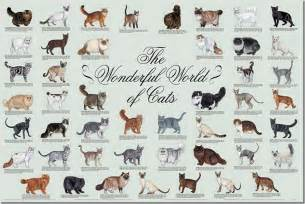 Types of Cats Breeds List
