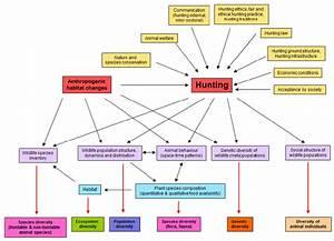 Impact Diagram Hunting  U2013 Biodiversity  Schematic