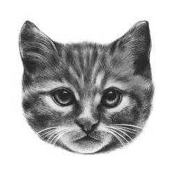 Cat Head Drawing Sketch
