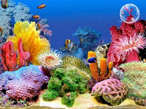 ecran de veille poissons forum aquariophilie durable
