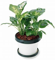 Plante Verte D Appartement : belles plantes les conseils du g ant vert ~ Premium-room.com Idées de Décoration
