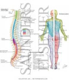 Spinal Nerves and Dermatomes