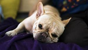 inflammatory bowel disease ibd dogs symptoms causes treatments