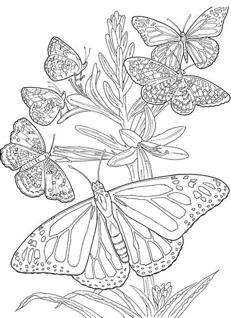 coloring book pages  adults printable kids colouring pages butterfly coloring page
