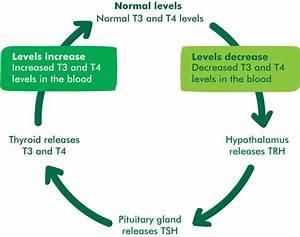 The Thyroid Gland - Understanding Cancer