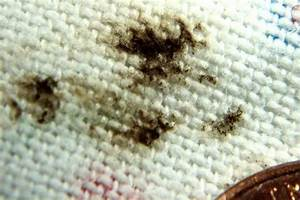 Bed bugs health for Bed bug marks
