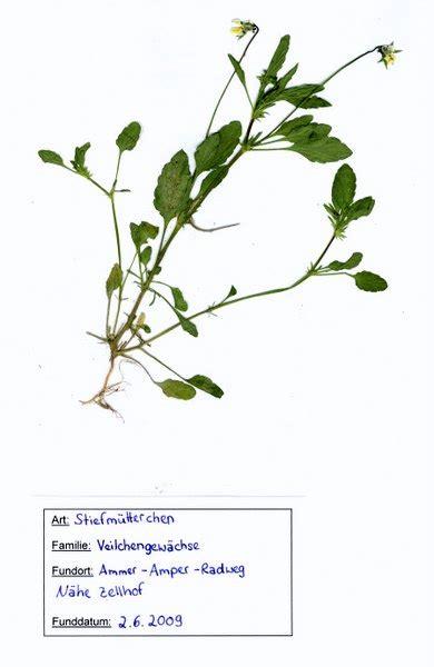Anleitung + kostenlose vorlage fürs deckblatt. Herbarium Vorlage Zum Ausdrucken
