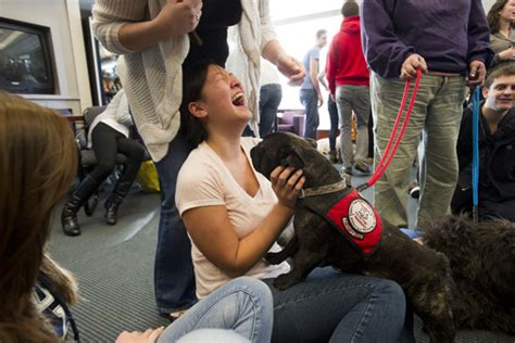 cute cuddly calming therapy dogs visit mugar bu today