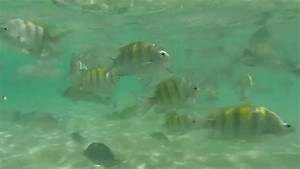 Swimming with tropical fish - YouTube