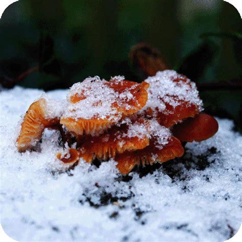 Pilze Im Garten Selber Züchten by Anleitung Pilze Selber Z 252 Chten Im Haus Und Garten