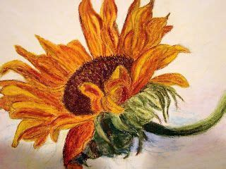 sunflower drawings sunflower drawing   sunflower