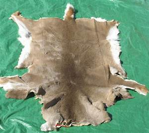 Tanned White Tail Deer Hides, Furs, Pelts, Skins for sale ...