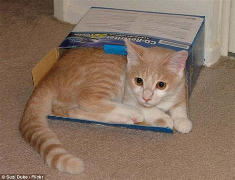 cats boxes why cold humans than warmer chances seeking survival hidden hours wild would place help keep