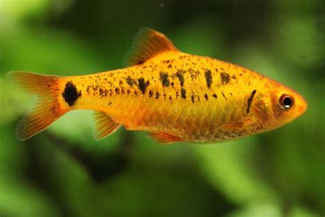 aquarium fish disease