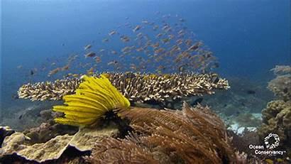 Coral Reefs Hawaii Senator Bleaching Island West