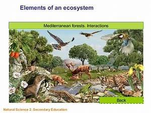 Elements of an ecosystem