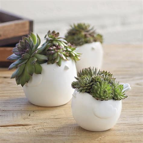 potting succulents indoors hen chicks succulents eclectic indoor pots and planters by redenvelope
