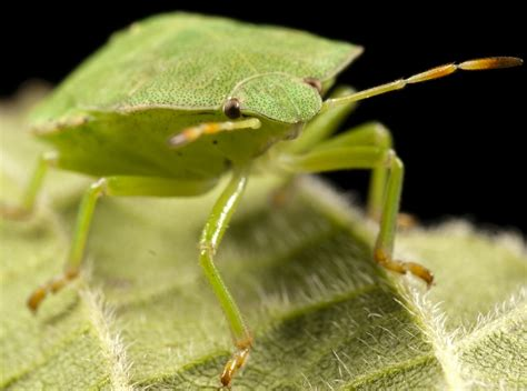 Bugs In by How To Get Rid Of Bed Bugs Review Of Methods And Means