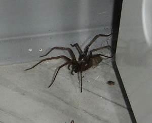 Spinnen Fernhalten Wohnung : insekten und spinnen seite 29 allmystery ~ Whattoseeinmadrid.com Haus und Dekorationen
