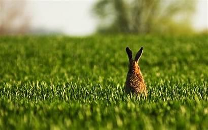 Rabbit Bunny Wallpapers Widescreen Animal Desktop Rabbits