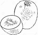 Kiwi Coloring Fruit Illustration Clipart Vector Designlooter Object Cartoon 46kb 1300 sketch template