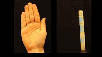 Soft Robot Harvard Movement Finger Movements Mimicking