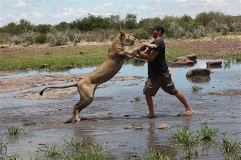 lui le salva la vita la leonessa lo abbraccia corriereit