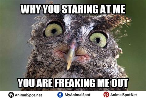 Owl Birthday Meme - owl memes