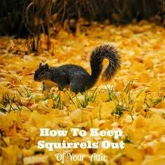 how to keep squirrels out of your garden how to get rid of squirrels with baking soda squirrel