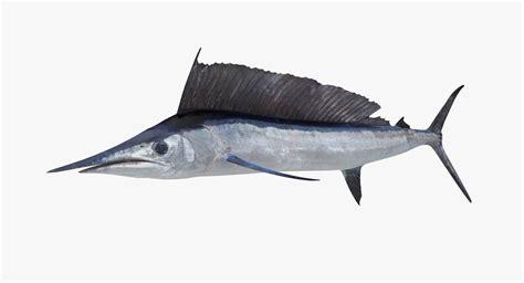 ma longbill spearfish
