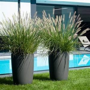 Plante D Extérieur En Pot : grande plante en pot exterieur pivoine etc ~ Teatrodelosmanantiales.com Idées de Décoration