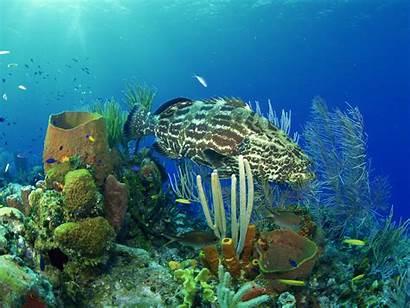 Underwater Landscape Wallpapers Coral Fish Ocean Under
