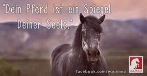 pferdesprüche englisch wer kennt schöne pferdesprüche englisch pferde sprüche