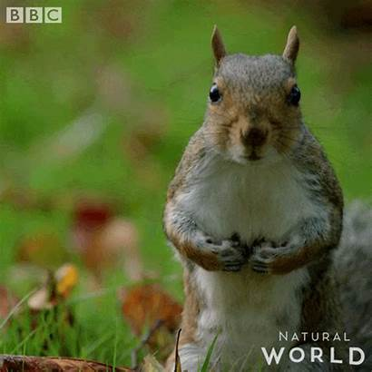 Squirrel Rodent Wildlife Mammal Giphy Gifs Tough