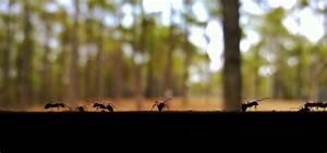 Ameisen Mit Flügel In Der Wohnung : ameisen bek mpfen nat rliche hausmittel f r garten und wohnung ~ Orissabook.com Haus und Dekorationen