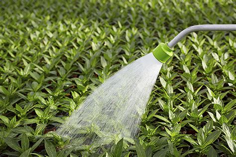 whole house filter tips for watering your garden and indoor plants