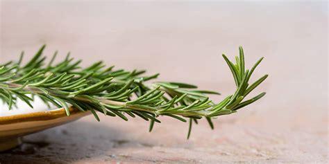 cuisiner les betteraves rouges le romarin herbe aromatique miraculeuse la libre be