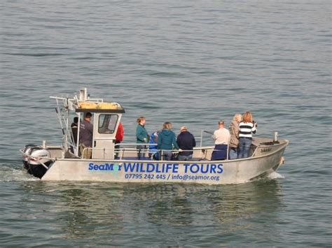 Boat Trip Newquay by Seamor Dolphin Boat Trips Picture Of Seamor
