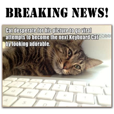Cat Desperate To Become Next Keyboard Or Grumpy Cat