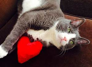 33 best Valentine's Cats images on Pinterest   Kitty cats ...
