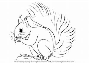 Learn How to Draw a Red Squirrel (Rodents) Step by Step ...