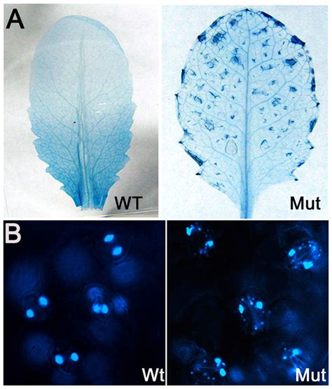 arabidopsis dj  protein confers stress protection