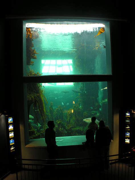 macduff marine aquarium feature page on undiscovered scotland