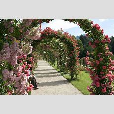 Climbing Plants For Walls And Fences  Plants For A